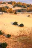 Autumn trees in deserts Royalty Free Stock Photos