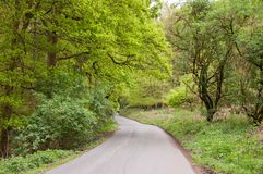 Autumn trees down a country lane in the British countryside. Stock Photo
