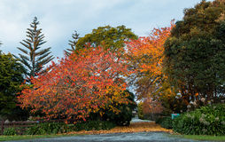 Autumn Trees Driveway Royalty Free Stock Photo