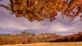 Autumn Trees e folhas em raios do sol video estoque