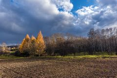 Autumn trees on the edge of arable land. On a cloudy day Stock Image