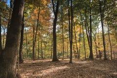 Autumn Trees em Forest Virginia fotografia de stock