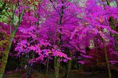 Autumn Trees en el bosque Imagen de archivo