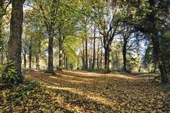 Autumn Trees en Queenswood, Herefordshire Imagen de archivo