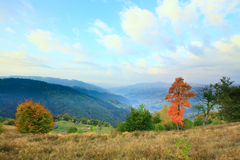 Autumn trees on evening mountainside. Stock Photos