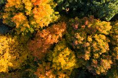 Autumn trees. Fall colors. Autumn nature. Autumn trees with colorful foliage view from above. Fall background royalty free stock image
