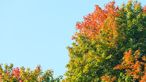 Autumn trees. Fall tree against the blue sky. Royalty Free Stock Photos