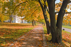 Autumn trees and fallen leaves Stock Photo