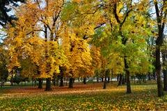 Autumn trees fallen leaves colorful fall scene Stock Image