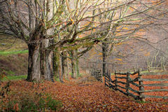 Autumn Trees and Fence Stock Photos