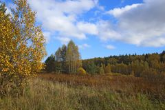 Autumn trees and field stock photography