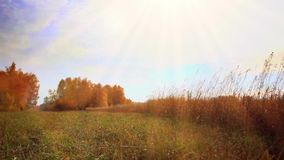 Autumn trees in the field and sun. HD 1920x1080 stock video