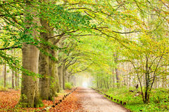 Autumn Trees. In a foggy day stock photo
