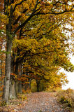 Autumn trees. In the forest stock photos