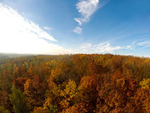 Autumn Trees Forest Aerial View Stock Images