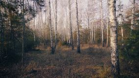 Autumn Trees in Forest Background Track In stock footage