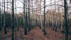 Autumn Trees in Forest Background Track In stock video footage