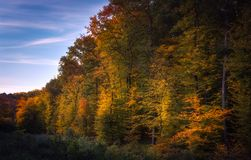 Autumn trees in the forest with blue sky. Autumn colourful trees in the forest with blue sky Stock Images