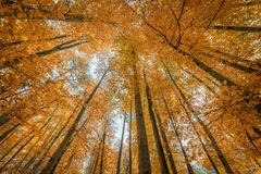 Autumn Trees In Forest colorido Fotografia de Stock Royalty Free