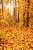 Autumn Trees In Forest colorido Fotografia de Stock