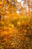 Autumn Trees In Forest colorido Fotos de Stock