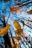 Autumn trees in forest Stock Image
