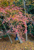 Autumn trees at forest in Nikko, Japan Stock Photography