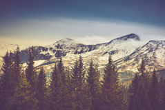 Autumn trees in the forest and snow-covered mountain in the distance. stock photo