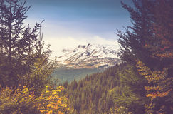 Autumn trees in the forest and snow-covered mountain in the distance. Filtered image:cross processed vintage effect Stock Photos