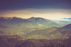 Autumn trees in the forest and snow-covered mountain in the distance. Filtered image:cross processed vintage effect Royalty Free Stock Images