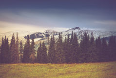 Autumn trees in the forest and snow-covered mountain in the distance. Filtered image:cross processed vintage effect Stock Images
