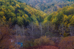 Autumn trees in the forest stand Stock Image