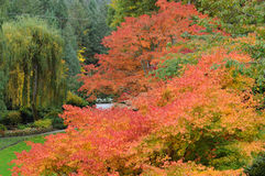 Autumn trees in garden Stock Photo