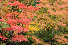 Autumn trees in garden Stock Photos