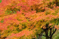 Autumn trees in garden Stock Photography