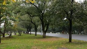 Autumn trees in garden. Autumn trees with the path at garden in Chengdu city, Sichuan province, China stock video footage