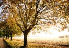 Autumn trees with glorious sunrise Stock Image