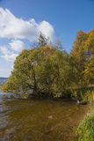 Autumn trees in gold furniture. On the river bank Stock Photos