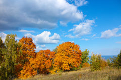 Autumn trees with golden leaves against blue sky with white clouds Royalty Free Stock Photography