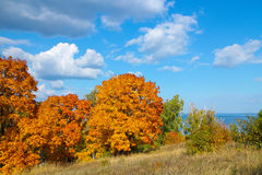 Autumn trees with golden leaves against blue sky with white clouds Royalty Free Stock Image