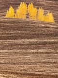 Autumn Trees. Golden like trees on  the hills in Palouse,  Washington Stock Photography