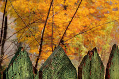 Autumn trees and green fence Royalty Free Stock Photos