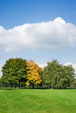 Autumn trees on a green meadow Royalty Free Stock Photography