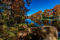 Autumn Trees at Guadalupe River in Texas Stock Photography
