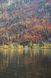 Autumn trees. Hallstatt, Austria. Autumn Trees Reflection Royalty Free Stock Photography