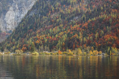 Autumn trees. Hallstatt, Austria. Autumn Trees Reflection Stock Photography