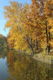 Autumn trees hanging over the quiet water Royalty Free Stock Image