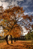 Autumn trees and house. A landscape view of autumn trees with golden leaves and an old house stock image