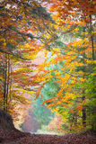 Autumn Trees i det tyst parkerar - härlig nedgångsäsong royaltyfria foton