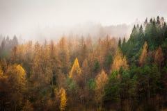 Autumn Trees i misten arkivbild
